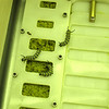 These three monarch caterpillars will be catching a ride on Atlantis to the ISS. Photo by Jim Lovett